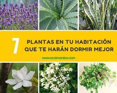 Algunas plantas tienen algunas características curativas increíbles, reducen la ansiedad y purifican el aire, gran combinación para ayudarte a dormir mejor.
