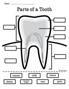 Dental Health Month, Health Class, Health Lessons, Kids Health, Children Health, Health Tips, Dental Assistant Study, Dental Hygiene, Dental Teeth