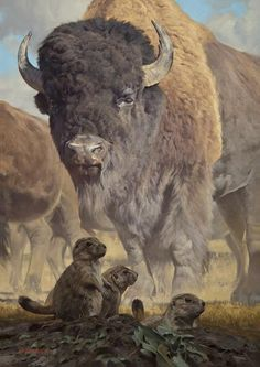 View Prairie Dog Days of Summer by Dustin van Wechel on artnet. Browse upcoming and past auction lots by Dustin van Wechel. Wildlife Paintings, Wildlife Art, Animal Paintings, Animal Drawings, Horse Drawings, Buffalo Animal, Buffalo Art, Native Art, Native American Art