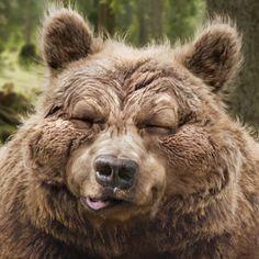 Jetzt Tipp abgeben und tolle Preise gewinnen. Was viele nicht wissen: Bären sind die einzigen Tiere, die während der Winterruhe nicht kacken müssen. Der erste Bäreschiss ist also ein handfestes Zeichen dafür, dass der Winter vorbei ist. Brown Bear, Wilderness, Wildlife, Animals, Win Prizes, Knowledge, Amazing, Animales, Animaux