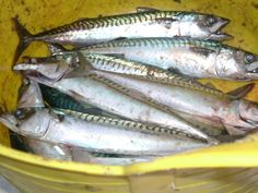 Mackerel for tea food-glorious-food-and-drink
