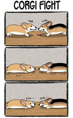Grrrrrrrrrrrrr #corgi: Corgis, Puppies, Cuteness, Animals, Dogs, Corgi Fight, Corgi Logic, Funny, Corgi Stuff