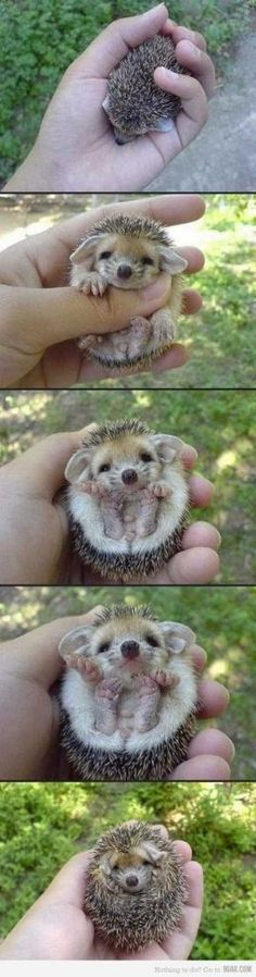 27 Funny Baby Animals.