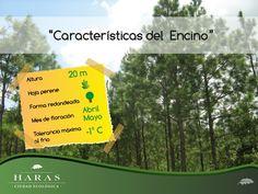 Residencial Campestre Haras del Bosque en Puebla de Zaragoza, Puebla Four Square, Natural, Big Windows, Grow Taller, Singapore, Nature, Au Natural