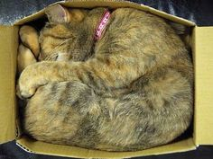 Purrfect fit.  :)