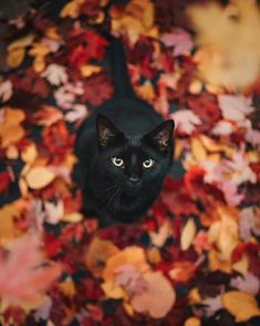Amazing fall days call for cute kittens Crazy Cat Lady, Crazy Cats, Beautiful Cats, Animals Beautiful, Beautiful Pictures, Hello Beautiful, Amazing Photos, I Love Cats, Cute Cats