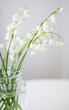 Love the smell of lily of the valley. Was one of my grandma's flowers in the front flower bed. She would bring in a bunch put them in a jar on the kitchen table and it would be so fragrant. Good memories. TM