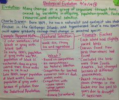 Natural Selection Biology GLAD Anchor Chart