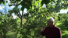 Miracle Farms, a 5-acre commercial permaculture orchard in Southern Quebec; There's a lot of people out there who say permaculture can't be applied at a commercial scale.   Maybe it's not exactly true, check this out :