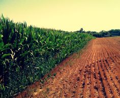 Drop a tailgate down on a turn row...watch the corn grow, baby that's a good night! =)