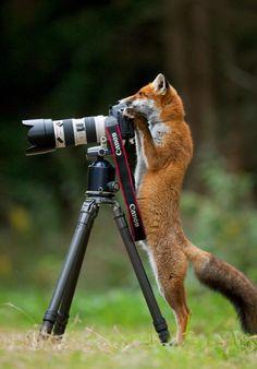 zorro-fotografo