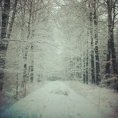 Filigrane - winter, Haagse bos, Twente, The Netherlands