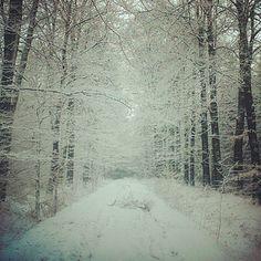 Filigrane - winter, Haagse bos, Twente, The Netherlands