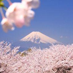 【marine_mittyan】さんのInstagramをピンしています。 《蔵出しシリーズ♪ #富士山 #山 #朝日 #桜 #春 #青空 #雪 #雪山 #冠雪 #東京カメラ部 #tokyocameraclub #日本の絶景》