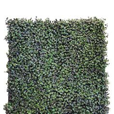 Design a lush hedge or shrubbery with the Greensmart Decor Artificial Greenery Ficus Wall Panels - Set of 4 without the hassle of watering and trimming. Ficus, Babyshower, Live Plants, Green Building, Artificial Plants, Here Comes The Bride, Hedges, How To Dry Basil, Greenery