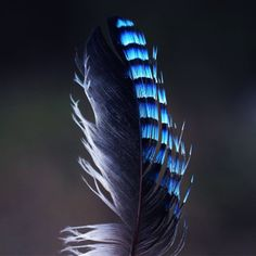 Looking forward to indulge into some DIY creative project? Then get our soft and fluffy craft feathers finely assorted, available in wholesale price. Feather Hat, Pheasant Feathers, Feather Crafts, Craft Items, Creative, Diy, Beautiful, Education, Decor