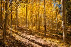 """The Colorado Trail"" Golden aspens surround the Colorado Trail on Kenosha Pass."