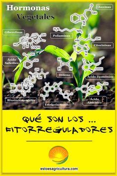 Manual didáctico sobre fitorreguladores y fitorregulación. Definición y función de estos bioestimulantes tan usados en el sector agrícola. Environment, Happy, Agriculture, Veggies, Plants