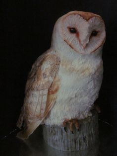 A barn owl cake that I made for my brother's birthday. That's right. It's a cake. 100% edible, too. Be awed. Awed, I tell you! I'll be posting a tutorial for how to make one soon, too!
