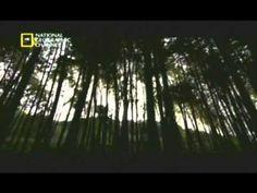 Katana Samurai - (Documentário dublado)
