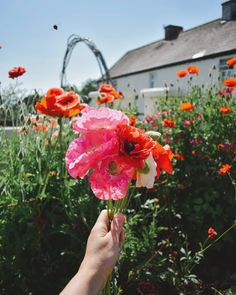 """@tinnockfarmtipperary: """"Another market done, now have my garden planner out, dreaming of next year's planting plans! We let…"""" Planting Plan, Garden Planner, Floral Wreath, Wreaths, How To Plan, Plants, Pictures, Decor, Photos"""