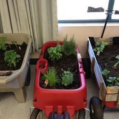 Mobile garden for the classroom. Great if the classroom does not have much natural sunlight to support indoor plants. 1st Grade Science, Kindergarten Science, Elementary Science, Science Classroom, Teaching Science, Science Activities, Teaching Plants, Science Room, Classroom Activities