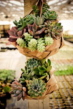 Have hens and chicks galore, the donkey tails will be easy to find (Green Acres Nursery).  I love the baskets, wonder were they came from?
