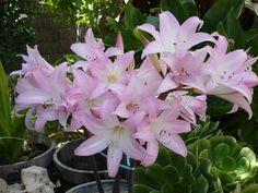 10 plantas muy venenosas   Cuidar de tus plantas es facilisimo.com