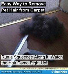 No more pet hair