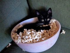 If kitty has popcorn, you know it's scary movie night!