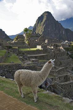 Machu Picchu, Peru. If there's llamas there, I'll be there!