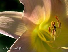my photos Antelope Canyon, My Photos, Places To Visit, Lily, Nature, Travel, Naturaleza, Lilies, Viajes