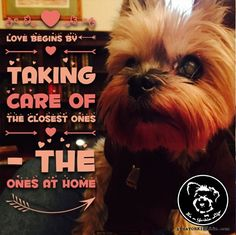 Check it out: https://itsayorkielife.com/give-your-yorkie-an-extra-snuggle-today-for-no/