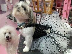 Princess+Polka+Dot+tutu+dress+by+PrincessFURFashions+on+Etsy,+$30.00
