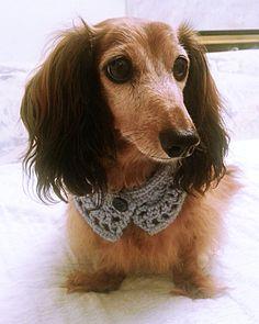Crochet Dog Scarf Dog Collar Dog Bandana Dog Cowl Cat by KichijojiKawaii | Etsy