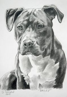 Animal drawings, sketches of dogs, pencil drawings, art drawings, sta Animal Sketches, Animal Drawings, Art Drawings, Pencil Drawings, Amazing Drawings, Beautiful Drawings, Pitbull Drawing, Desenho Tattoo, Dog Paintings