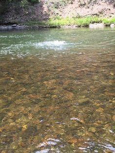 Fish On Conejos River
