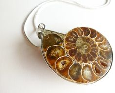 Crystallized Natural Ammonite Fossil Stone by FunkyMaMaJewelry, $38.00