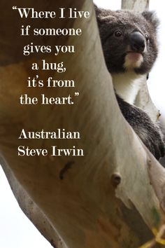 """""""Where I live, if someone gives you a hug, it's from the heart.""""  Australian Steve Irwin – on image of koala taken at Hanson Bay Sanctuary, Kangaroo Island, Australia by F. McGinn – Learn about koala magic and wondrous wildlife viewing in article on travel in Australia at http://www.examiner.com/article/astounding-nature-casts-a-spell-of-koala-magic-australia"""
