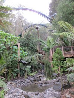 Forest Aviary at Te Wao Nui, Auckland Zoo. This walk-through aviary contains many forest birds of New Zealand.