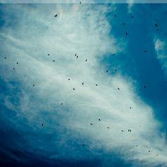 iPad Retina Wallpaper birds clouds