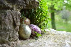 Hunting dragons eggs