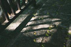 佛典格言  眾生章  無常 4.3.3  形無常主神無常家  形神尚離豈有國耶 龍藏16冊0014仁王護國般若經卷下