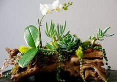 orchids, succulents, driftwood. exactly.