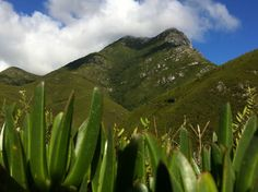 Montague Pass, facing the Outeniqua Pass Mountains, Garden, Face, Nature, Travel, Garten, Naturaleza, Viajes, Lawn And Garden