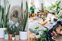 From the classic fiddle leaf to the unkillable snake plant.