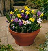 My Secret Garden, Flower Garden, Plants, Garden, Agriculture, Secret Garden, Planters, Flowers, Backyard