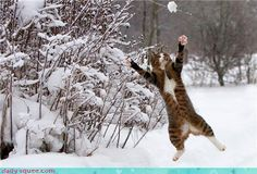 Get that ball, kitty!