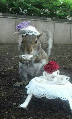 Student Befriends Squirrels On Campus And Dresses Them In Cute Costumes A wild, but friendly Penn State squirrel who wears hats to brighten up your day! Halloween Mono, Halloween Games For Kids, Kids Party Games, Cute Halloween Costumes, Halloween Food For Party, Easy Halloween, Costumes Kids, Sleepover Games, Halloween Drinks