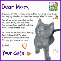 Cat Care Keeping Your Cat Healthy - Cat's Nine Lives Mothers Day Poems, Happy Mothers Day, Crazy Cat Lady, Crazy Cats, Cute Cats, Funny Cats, Cat Poems, Amor Animal, Animal Poems